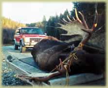N.h. Moose Moose Hunting in NH